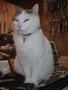 Fakir cat in a shop